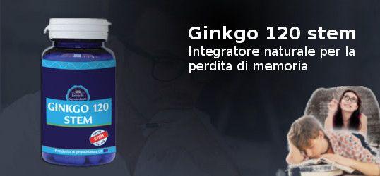 Ginkgo 120 Stem