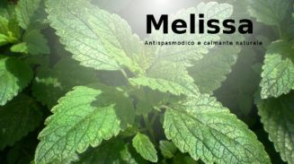 Melissa: proprietà e benefici