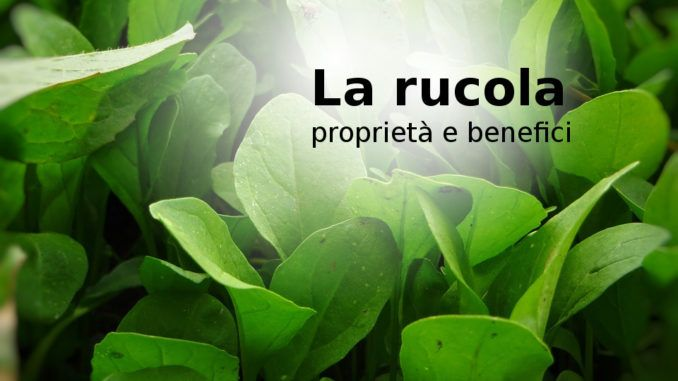 La rucola: proprietà e benefici